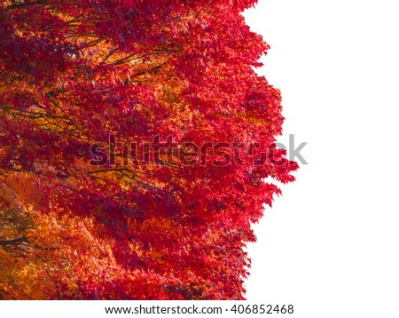 collection beautiful colorful autumn leaves isolated on white background, copy space on the right. - stock photo