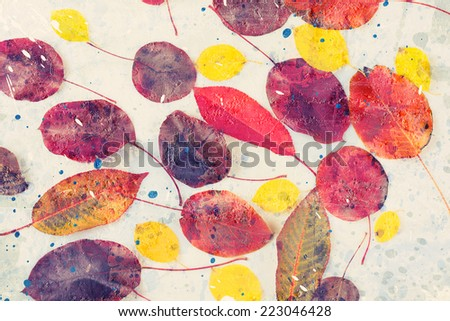 collection beautiful colorful autumn leaves on white background - stock photo