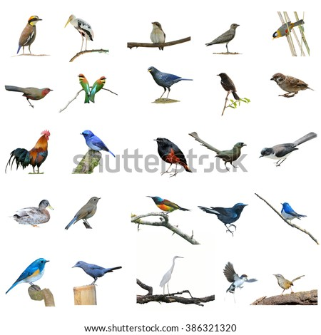 Collection birds set - stock photo
