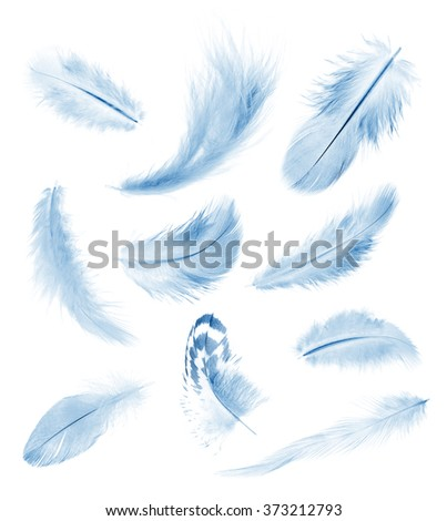 collection blue feathers of birds isolated on white