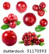 collection cranberries isolated on white background - stock photo