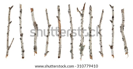 Collection dry branches birch isolated on white background - stock photo