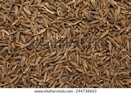 Collection dry cumin seed jeera(india) or Cuminum cyminum