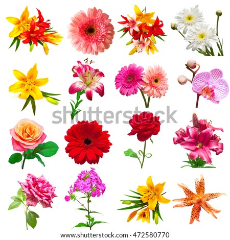 Collection flowers isolated on white background. Floristics, bouquets, wedding gift. Flat lay, top view. Valentine's Day, love. Flowers roses, chrysanthemums, phlox, daisies, orchids, gerbera