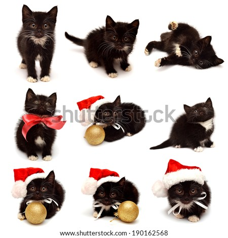 Collection little kitten with Santa Claus hat isolated on white background