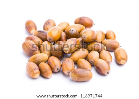 Collection of acorns isolated on white background