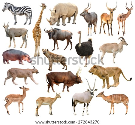 collection of africa animals isolated on white background - stock photo