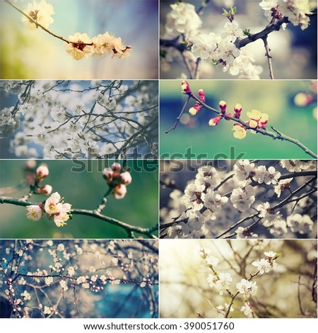 Collection of apricot and plum  flowers in spring time, natural seasonal abstract vintage hipster background - stock photo
