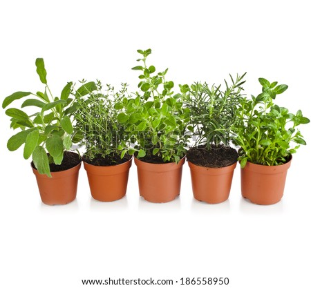 Collection of aromatic herbs in brown flower pot isolated on white background - stock photo