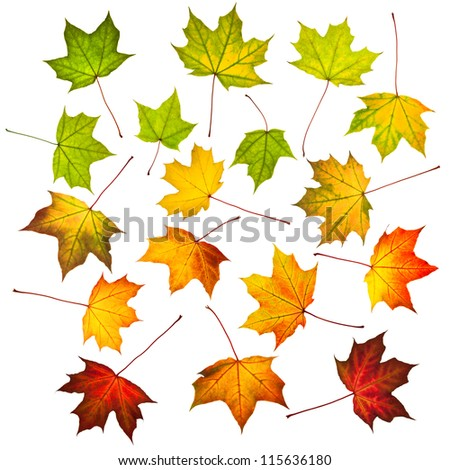 Collection of autumn leaves isolated on white - stock photo