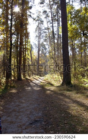Collection of Beautiful Colorful Autumn Leaves / green, yellow, orange, red  - stock photo