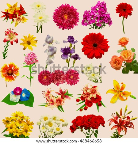 Collection of beautiful colorful flowers isolated on white background. Retro filter. Vintage. Flat, top view