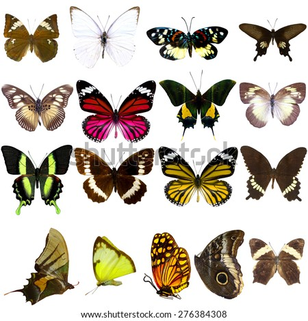 Collection of beautiful tropical butterflies isolated on white background - stock photo