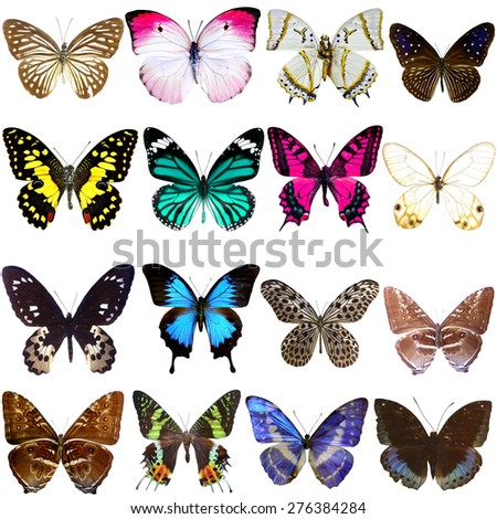 Collection of beautiful tropical butterflies isolated on white background, Set of realistic colorful tropical butterflies and insect, zoology, entomology, biology - stock photo
