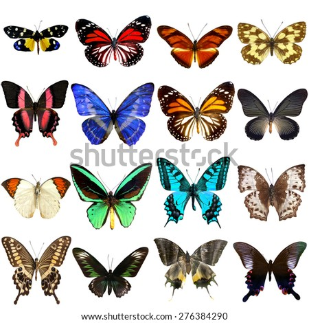 Collection of beautiful tropical butterflies isolated on white background,Set of realistic colorful tropical butterflies and insect, zoology, entomology, biology - stock photo
