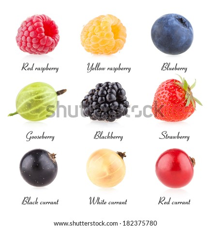collection of 9 berry images - stock photo