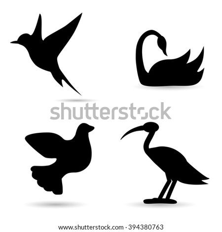 Collection of bird species on white background.
