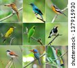 collection of birds - stock photo