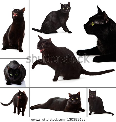 Collection of  black Cat on white background. - stock photo