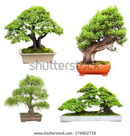 Collection of bonsai. Isolated on white background - stock photo