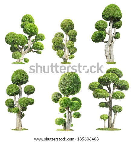 Collection of bonsai tree isolated on white background - stock photo