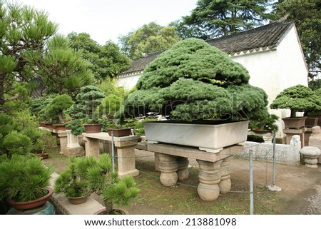 Collection of bonsai trees, Asia - stock photo