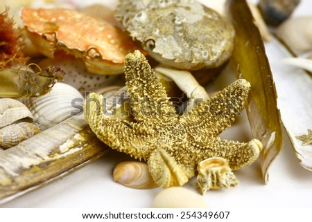 collection of bunch of shells starfish and sea weed