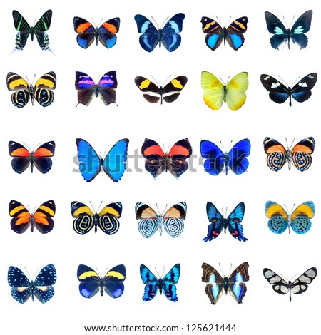 Collection of butterflies in high definition on a white background - stock photo