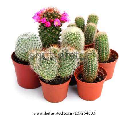 Collection of cactuses in a pot, over white background - stock photo