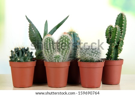 Collection of cactuses on wooden table