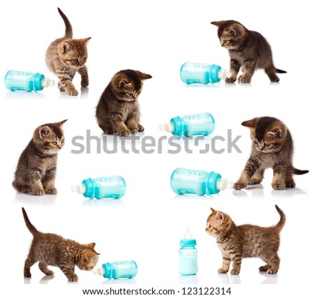 collection of cat kitten with a milk bottle isolated on white background. A set of funny cats. British kittens collection - stock photo