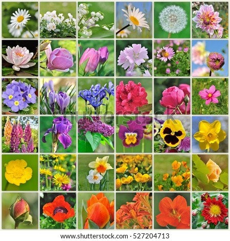 collection of colorful flowers in square board