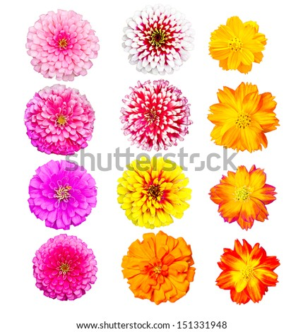 collection of colorful head flower, fresh and natural