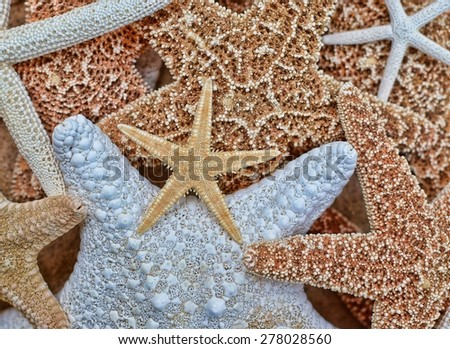 Collection of colorful starfish - stock photo