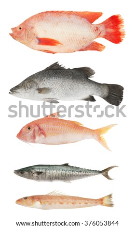 Collection of different fish isolated on white background - stock photo