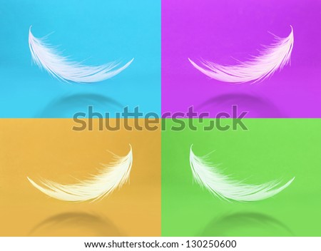 Collection of feathers on color background - stock photo
