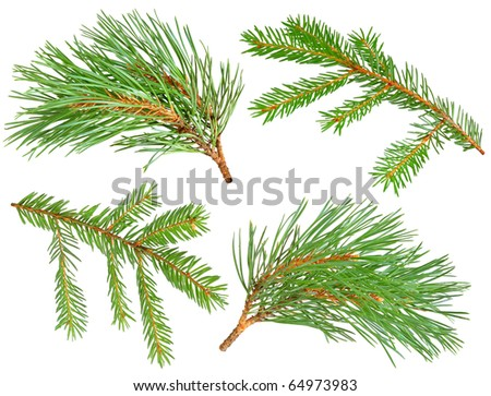 Collection of fir and pine branches isolated on white - stock photo