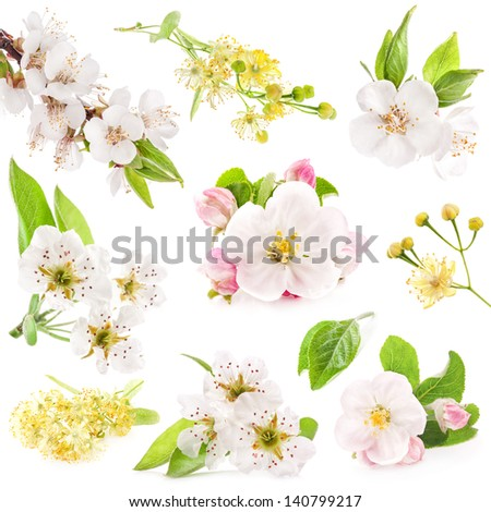 Collection of flowers of fruit trees isolated on white background