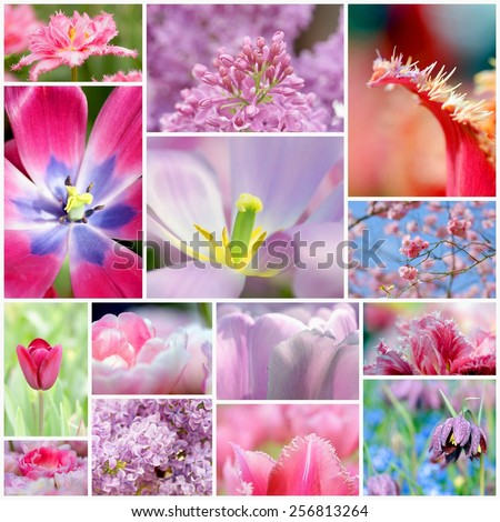 collection  of flowers with soft pastel colors - stock photo
