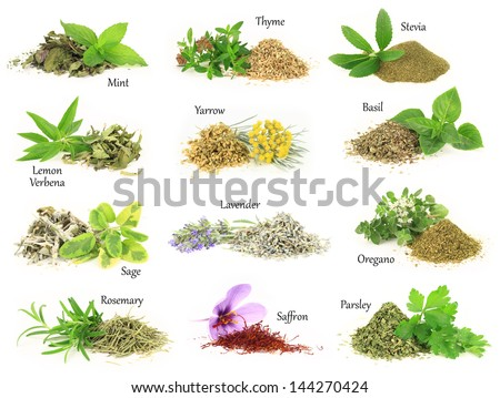 Collection of fresh and dry aromatic herbs - stock photo