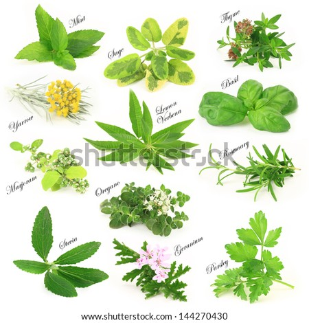 Collection of fresh aromatic herbs - stock photo