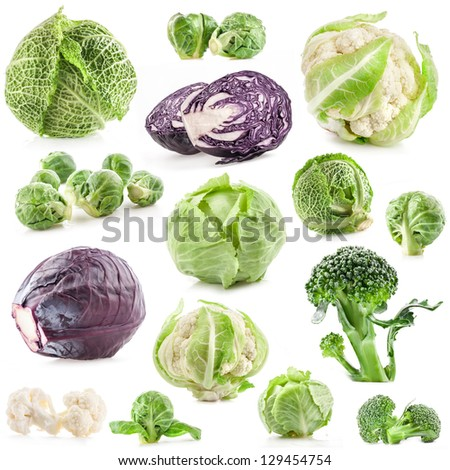 Collection of fresh cabbage, isolated on white background - stock photo