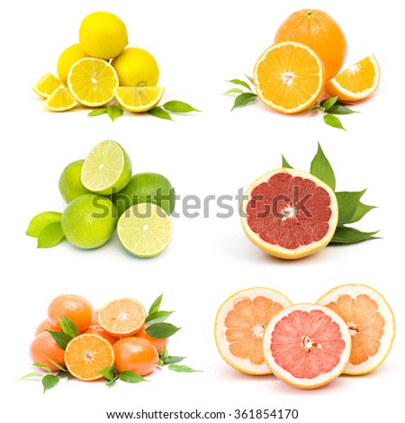 collection of fresh citrus fruit - stock photo