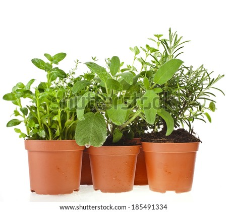 Collection of fresh flavoring herbs in brown flower- pot isolated on white background