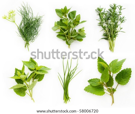 Collection of fresh herbs - chives, oregano, lemon balm, savory, dill, peppermint - stock photo