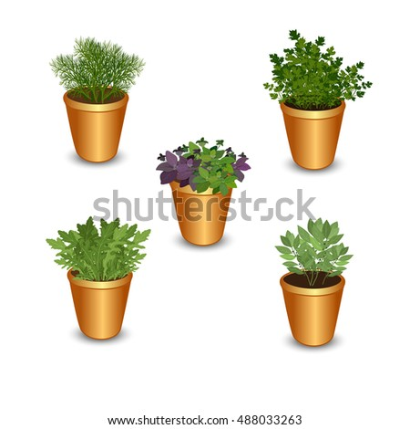 Collection of fresh herbs in pots isolated: bay leaves, arugula,basil,parsley and dill. Kitchen herbs on a white background