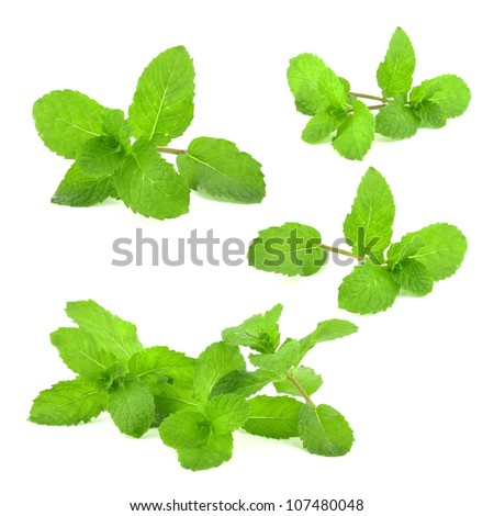 collection of fresh mint leaf isolated on white background