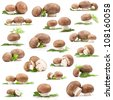 Collection of fresh Mushroom champignons with twig dill isolated on white background - stock photo