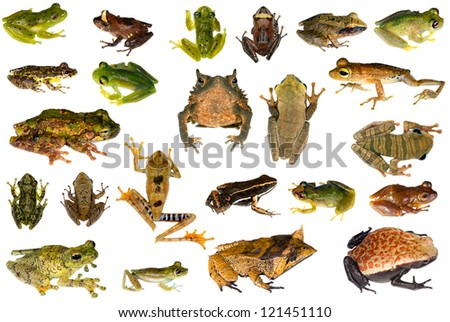 Collection of frogs and toads  from the Amazon rainforest