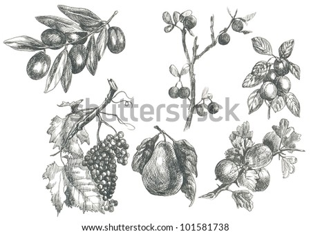 COLLECTION OF FRUIT AND VEGETABLES. Pictures / collection of fruit / vegetables. (This is the original artwork - black marker pen with a hard tip.) - stock photo